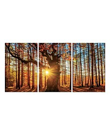 """Chic Home Decor Botanical Forest 3 Piece Wrapped Canvas Wall Art -27"""" x 60"""""""
