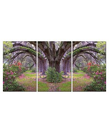 Chic Home Decor Lavender Cherry 3 Piece Wrapped Canvas Wall Art Garden