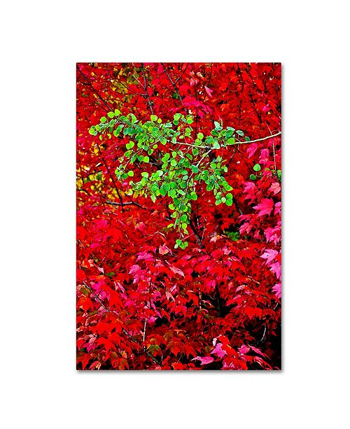 "Trademark Global The Lieberman Collection 'Branches' Canvas Art - 24"" x 16"" x 2"""