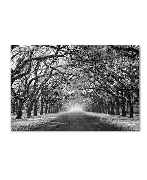 "Trademark Global Mike Jones Photo 'Wormsloe Inf Light' Canvas Art - 32"" x 22"" x 2"""