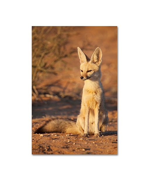 "Trademark Global Robert Harding Picture Library 'Small Animals' Canvas Art - 24"" x 16"" x 2"""