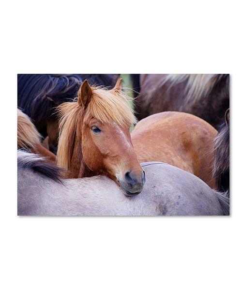 "Trademark Global Robert Harding Picture Library 'Horses 1' Canvas Art - 19"" x 12"" x 2"""