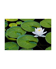 "Michael Blanchette Photography 'Frog Living Room' Canvas Art - 19"" x 12"" x 2"""