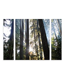 "Pierre Leclerc 'Sunrays' Multi Panel Art Set Small 3 Piece - 44"" x 34"" x 2"""