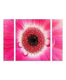 "Kurt Shaffer 'Pink Gerber' Multi Panel Art Set Large 3 Piece - 44"" x 34"" x 2"""
