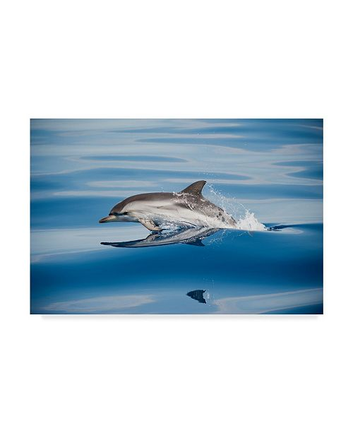"Trademark Global Mirko Ugo 'Striped Dolphin' Canvas Art - 19"" x 2"" x 12"""
