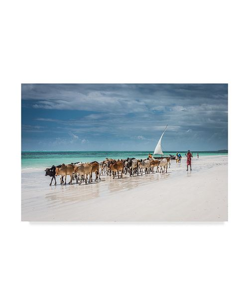 "Trademark Global Jeffrey C Sink 'Masai Cattle On Zanzibar Beach' Canvas Art - 47"" x 2"" x 30"""