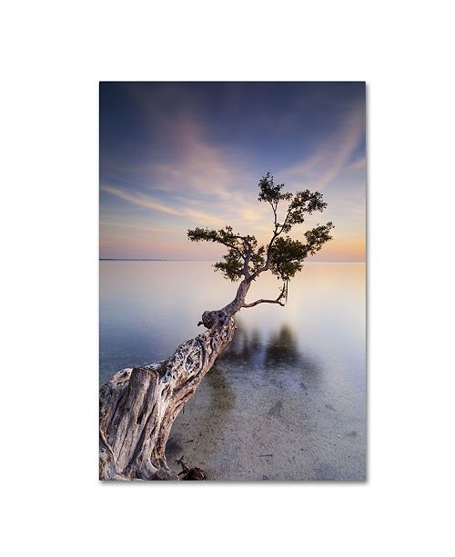 "Trademark Global Moises Levy 'Water Tree X' Canvas Art - 47"" x 30"" x 2"""