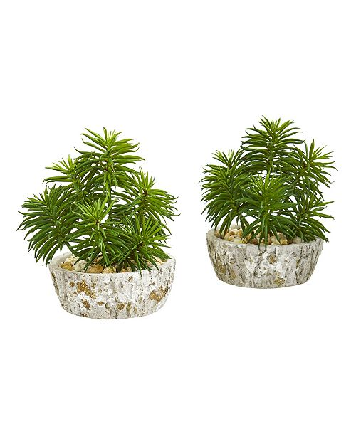 Nearly Natural Succulent Artificial Plant in Weathered Oak Planter (Set of 2)