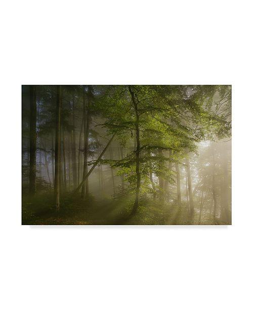 """Trademark Innovations Norbert Maier 'Morning Beauty' Canvas Art - 24"""" x 16"""" x 2"""""""