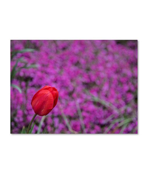 "Trademark Global Kurt Shaffer 'Images of Spring' Canvas Art - 14"" x 19"""