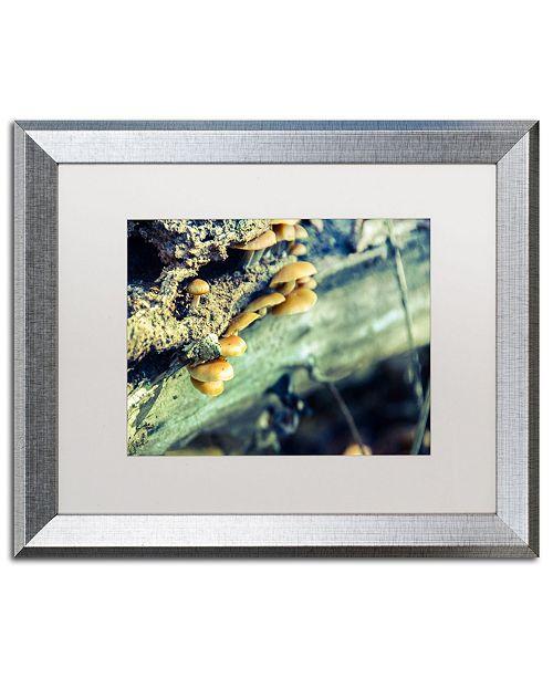"""Trademark Global PIPA Fine Art 'Aged Mushroom' Matted Framed Art - 16"""" x 20"""""""
