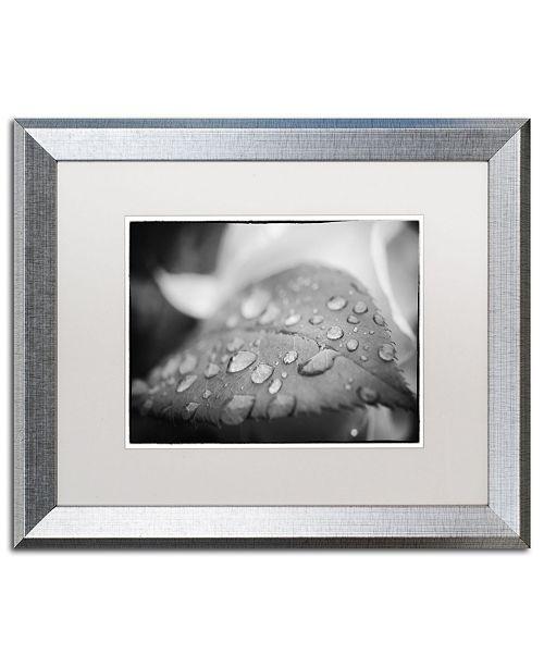 "Trademark Global PIPA Fine Art 'Dew on Leaf of Rose Plant' Matted Framed Art - 16"" x 20"""