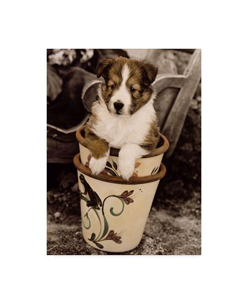 """Trademark Global Sharon Forbes 'Potted Pup' Canvas Art - 18"""" x 24"""""""