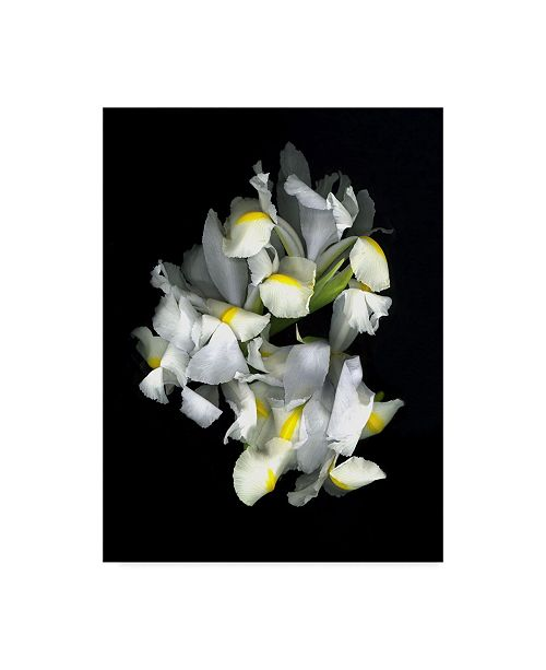 "Trademark Global Susan S. Barmon 'White Iris' Canvas Art - 18"" x 24"""