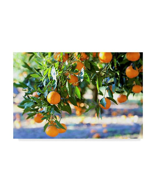 "Trademark Global Incredi 'Citrus Oranges' Canvas Art - 19"" x 12"""