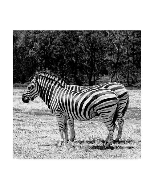 """Trademark Global Incredi 'Gray Zebra' Canvas Art - 24"""" x 24"""""""