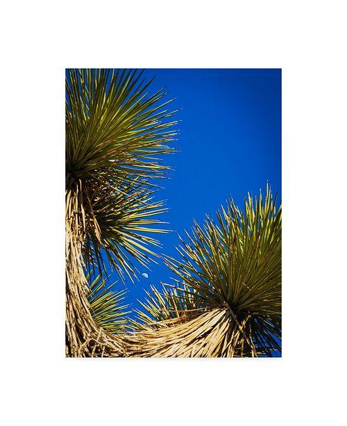"Trademark Global Janice Sullivan 'Desert Trees' Canvas Art - 18"" x 24"""