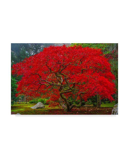 "Trademark Global Jason Matias 'Japanese Maple In Autumn' Canvas Art - 24"" x 16"""