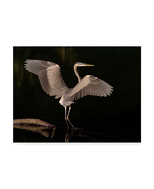 "Trademark Global J.D. Mcfarlan 'Big Bird Heron' Canvas Art - 19"" x 14"""