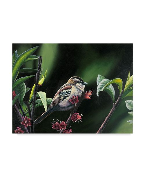 "Trademark Global Patricia Feathers 'Quiet Perch' Canvas Art - 19"" x 14"""