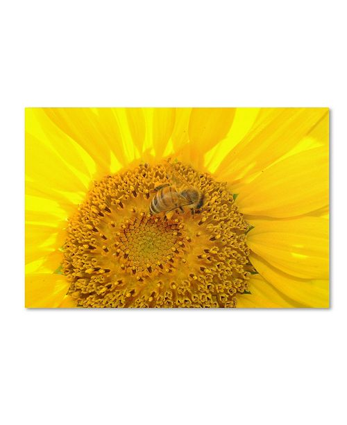 "Trademark Global Monica Fleet 'Honey-Maker' Canvas Art - 19"" x 12"""