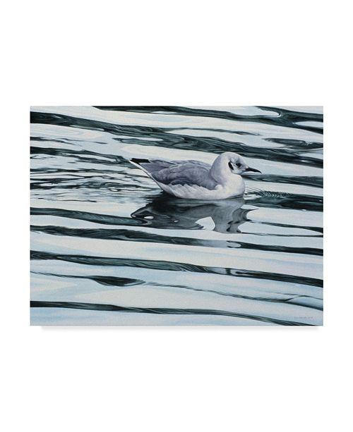"Trademark Global Ron Parker 'Bonaparteis Gull' Canvas Art - 24"" x 32"""