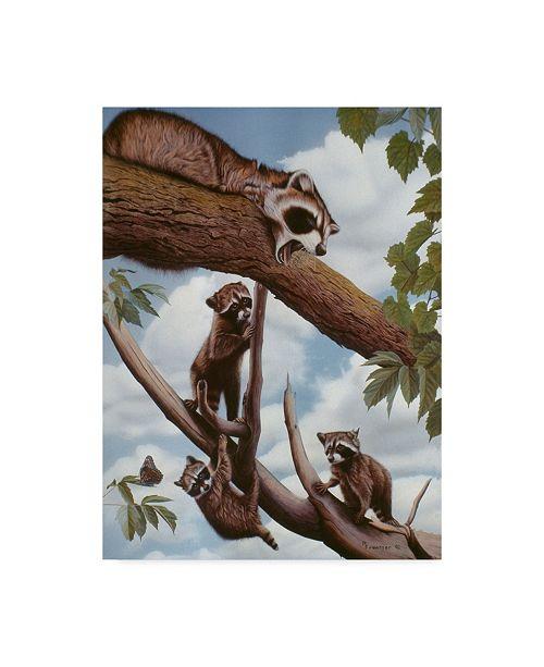 "Trademark Global Rusty Frentner 'Ringtail Reveille' Canvas Art - 24"" x 32"""