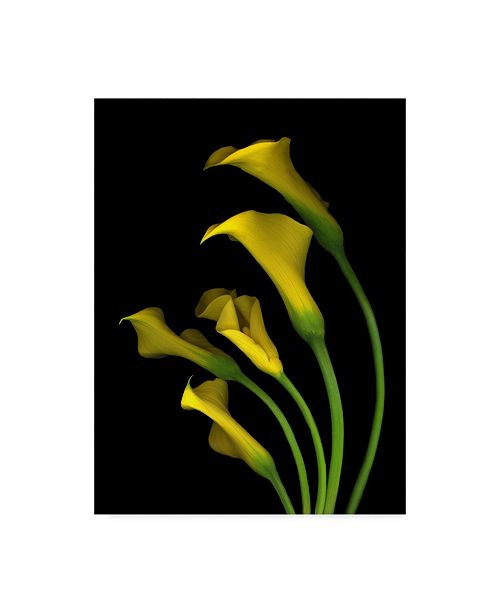 "Trademark Global Susan S. Barmon 'Calla Lilies 3' Canvas Art - 24"" x 32"""