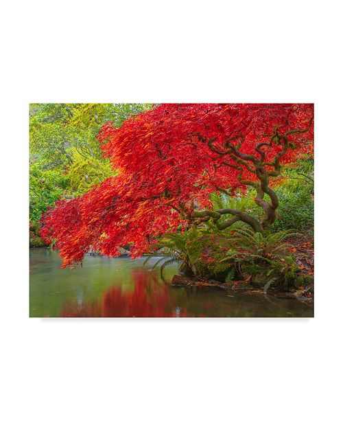 "Trademark Global Jason Matias 'Japanese Maple Over Water' Canvas Art - 47"" x 35"""