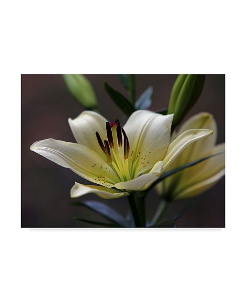 "Trademark Global J.D. Mcfarlan 'Lily 1' Canvas Art - 32"" x 24"""