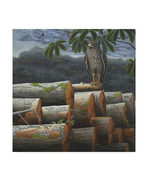 """Trademark Global Luis Aguirre 'Wounded Nature' Canvas Art - 35"""" x 35"""""""