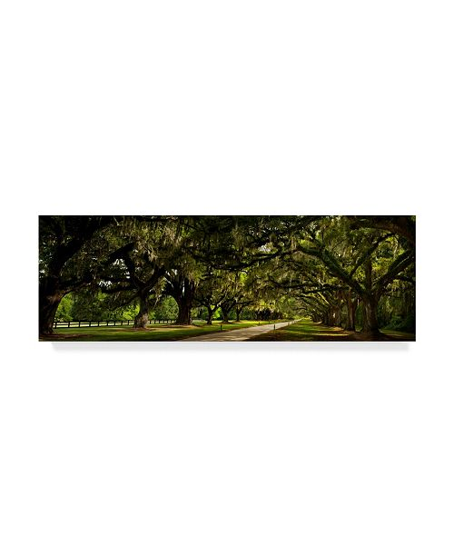"Trademark Global Natalie Mikaels 'Southern Canopy' Canvas Art - 24"" x 8"""