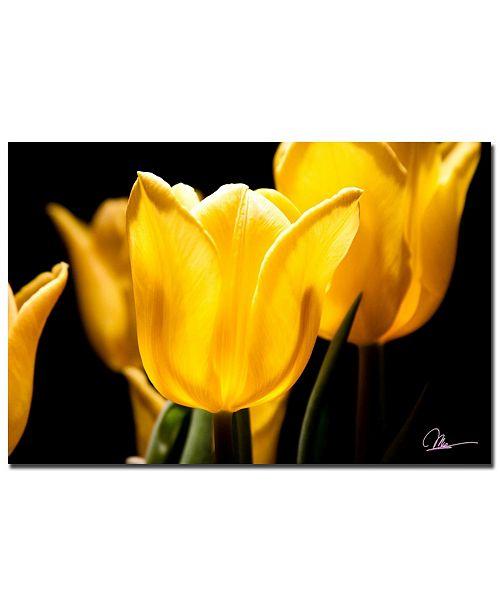 "Trademark Global Martha Guerra 'Yellow Tulips V' Canvas Art - 24"" x 16"""