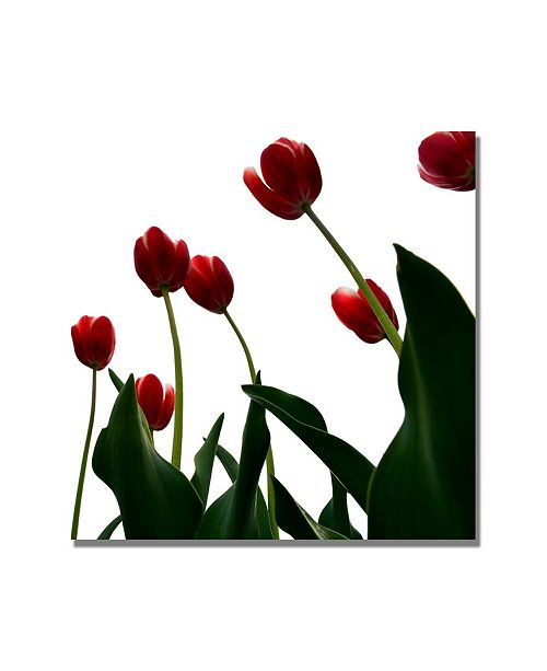 """Trademark Global Michelle Calkins 'Red Tulips from Bottom Up V' Canvas Art - 35"""" x 35"""""""