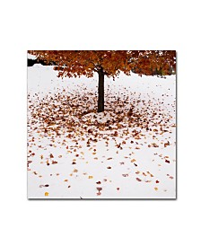 "Kurt Shaffer 'Maple Leaves in the Snow' Canvas Art - 14"" x 14"""
