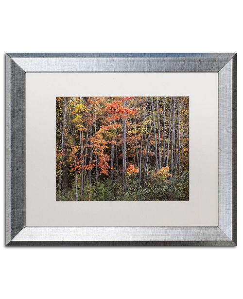 "Trademark Global Jason Shaffer 'Autumn Tree Line' Matted Framed Art - 20"" x 16"""