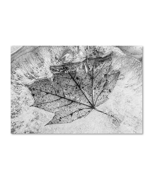"Trademark Global Jason Shaffer 'Encased in Ice' Canvas Art - 19"" x 12"""