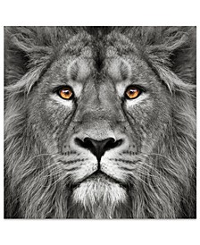 "'King of The Jungle Lion' Frameless Free Floating Tempered Glass Panel Graphic Wall Art - 38"" x 38''"
