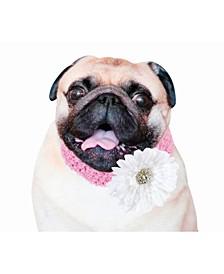 Flower Girl Dog Collar