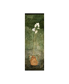 "Pablo Esteban White Orchid in Pot on Green Canvas Art - 15.5"" x 21"""