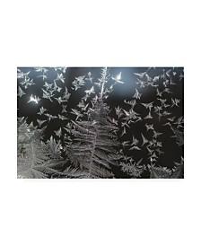 "Kurt Shaffer Photographs Ice crystal patterns on my window Canvas Art - 27"" x 33.5"""