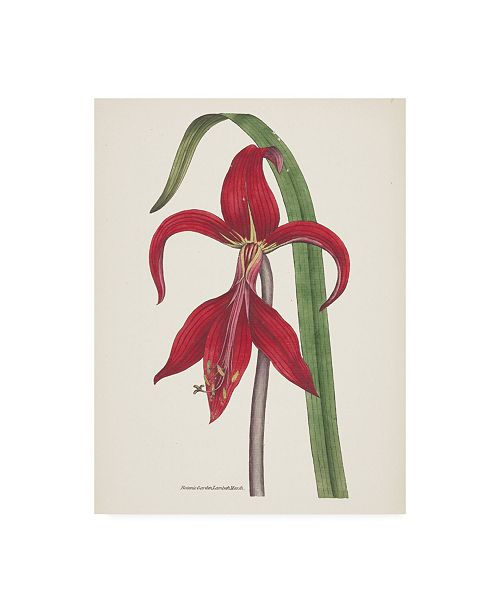 "Trademark Global Wild Apple Portfolio Antique Botanical XIV Cream Canvas Art - 27"" x 33.5"""