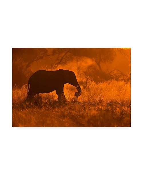 "Trademark Global Mario Moreno Golden Elephant in Savute Canvas Art - 20"" x 25"""