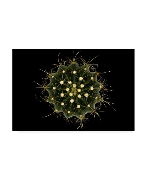 "Trademark Global Victor Mozqueda Coleocephalocereus Aureus Canvas Art - 20"" x 25"""