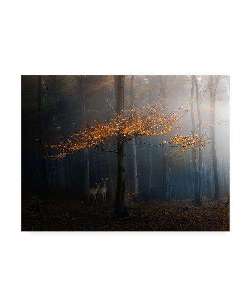 "Trademark Global Veselin Atanasov Orange Leaves on Branch Canvas Art - 20"" x 25"""