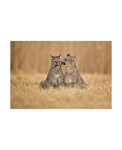 "Trademark Global Milan Zygmunt Cougars Couple Canvas Art - 20"" x 25"""