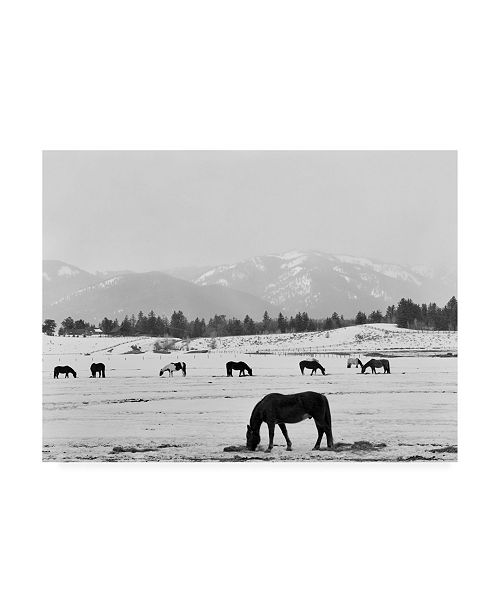 """Trademark Global Monte Nagler Black Horse in Winters Mountains Wyoming Canvas Art - 37"""" x 49"""""""