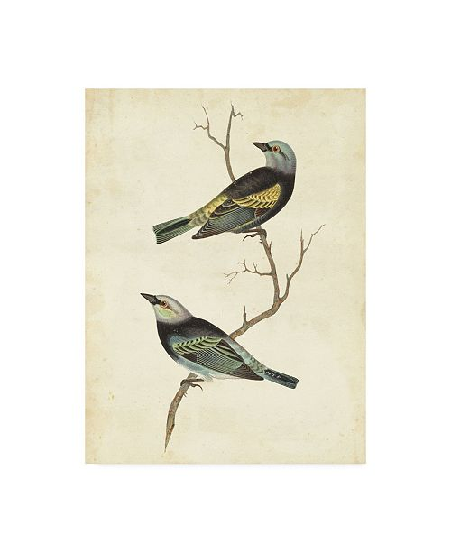 "Trademark Global Cassin Blue Headed Tanager Canvas Art - 20"" x 25"""