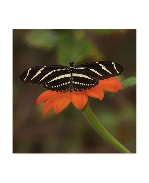 "Trademark Global PH Burchett Butterfly Portrait VII Canvas Art - 36.5"" x 48"""